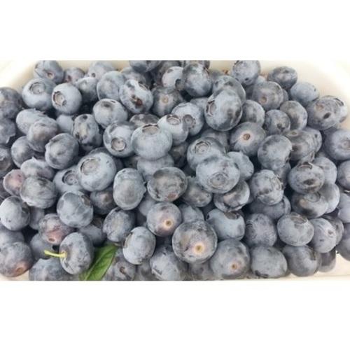 [다오네] 무농약 블루베리 2kg